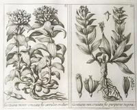 Unique Original French 18th Century Botanical Copperplate Prints (6 of 7)