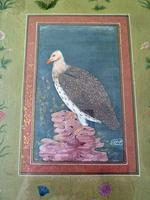 Fine Qajar / Indian School Painting of a Vulture- Signed. (4 of 4)
