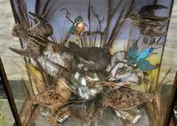Taxidermy Edwardian Case of 7 Birds Inc: Kingfisher, Snipe, Moorhen & Woodcock (5 of 15)