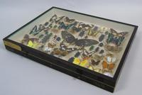 Antique Insect and Butterfly Specimens Collection (5 of 7)