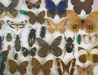 Good Antique Butterfly & Insect Specimens Collection (6 of 8)