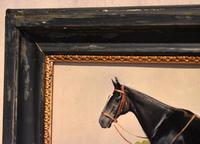 Horse oil painting 'Victor' by L Mallender (2 of 8)