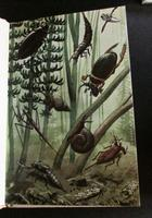 What To Look For In Summer, Winter, Spring  & Autumn,  Ladybird 1st Editions, 4 Volumes 4 Vols (4 of 7)