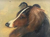 Pair of Scottish 19th Century Oil Paintings Rough Collie Dog Portraits After George Washington Brownlow (26 of 49)