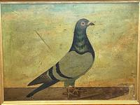 Decorative Sporting Early 20th Century Oil Canvas Painting English Racing Pigeon (4 of 35)