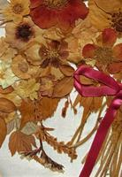 19th Century Victorian Floral Still Life of Pressed Flowers Picture (6 of 12)