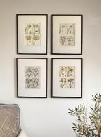 18th Century French Hand Coloured Botanical Copperplate Engravings (6 of 6)