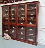 Large Antique Museum Cabinet c.1900 (4 of 7)