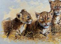 Exceptional 'pride Of Lion Cubs' Large Wildlife Oil Painting By 'silvia Duran' (6 of 12)