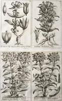 Unique Original French 18th Century Botanical Copperplate Prints (5 of 7)