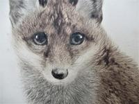 Original print, drypoint engraving, Study of a Fox Cub, indistinctly signed, c1930 (5 of 6)