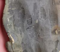 Antique bronze Alligator skin rug, Franz Bergman (6 of 13)