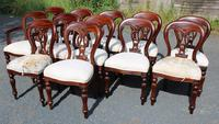 1960s Set of 12 Mahogany Balloon-back Dining Chairs Cream Upholstery - 10+2 Carvers