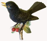 Porcelain Blackbird by Goebel of Germany (5 of 6)