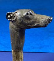 Late Victorian  Birch Greyhound Walking Stick (14 of 21)