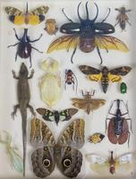 Fabulous Antique Collection Cased Insect & Butterfly Specimens (2 of 7)