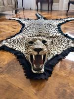 Antique Leopard Skin Rug Taxidermy by Peter Spicer (16 of 18)
