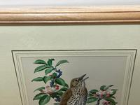 """Watercolour """"Chirping Song Thrush Bird"""" Signed Charles Frederick Tunnicliffe OBE RA 1901-1979 (28 of 35)"""
