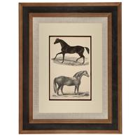 Hand Coloured 'Galloping Horse' Lithograph. Goldsmith 1875 (4 of 4)
