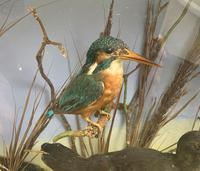 Taxidermy Edwardian Case of 7 Birds Inc: Kingfisher, Snipe, Moorhen & Woodcock (6 of 15)