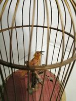 French Style 'singing Bird' Automaton (2 of 7)