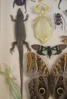 Fabulous Antique Collection Cased Insect & Butterfly Specimens (6 of 7)