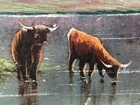 Victorian 19th Century Oil Painting Scottish Highlands Loch Cattle Drinking (2 of 12)