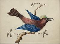Watercolour of Bird (4 of 4)