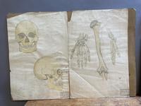 Anatomical Studies (5 of 11)