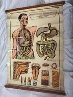 Vintage Medical Anatomical Elementary Physiology Chart Poster Early Arnold No 5 (14 of 19)