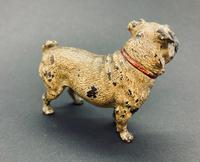 Good Antique Austrian Cold Painted Bronze Standing Pug, Circa 1890, Marks to Base (8 of 8)