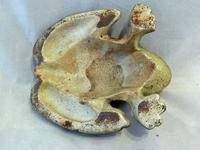 Charming Early 20th Century Cold Painted Frog Cast Iron Door Stop (4 of 5)