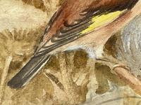 Ornithological Watercolour Finches Birds Study by Florence Barlow Royal Doulton (11 of 40)