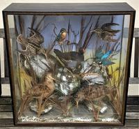 Taxidermy Edwardian Case of 7 Birds Inc: Kingfisher, Snipe, Moorhen & Woodcock (12 of 15)