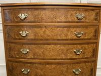 Burr Walnut Bow Front Chest (10 of 12)