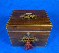 18th Century Mahogany  Shell Inlaid Tea Caddy (2 of 18)