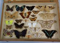 Antique Butterfly and Moth Cased Specimen Collection (2 of 7)