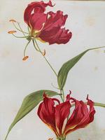 Beautiful 'Gloriana Rothschildiana' Rare Chromolithograph 1903 (3 of 4)