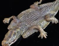 Antique bronze Alligator skin rug, Franz Bergman (3 of 13)