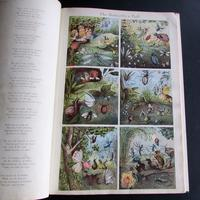 1880 The Prince of Nursery Playmates 1st Edition (7 of 8)