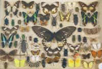Antique Insect and Butterfly Specimens Collection (6 of 7)
