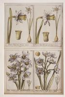 18th Century French Hand Coloured Botanical Copperplate Engravings (2 of 6)
