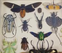 Fabulous Antique Collection Cased Butterfly & Insect Specimens (5 of 8)