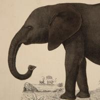 Hand Coloured 'Elephant' Lithograph. Goldsmith 1875