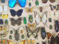 Antique Butterfly and Insect Specimens Collection (4 of 8)