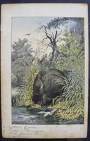 6 Framed Animal Coloured Pictures Plates C1877 Sketches from Nature - India (3 of 14)