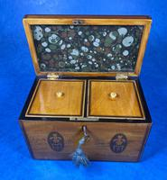 George III Satinwood Twin Tea Caddy with Prince of Wales Inlay (15 of 15)