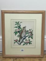 """Watercolour """"Chirping Song Thrush Bird"""" Signed Charles Frederick Tunnicliffe OBE RA 1901-1979 (5 of 35)"""