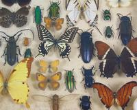 Antique Butterfly and Insect Specimens Collection (7 of 8)
