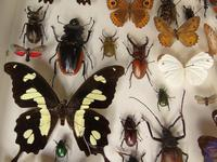 Large Antique Specimen Butterfly & Insect Case (7 of 7)